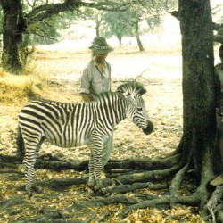 With an orphan zebra foal